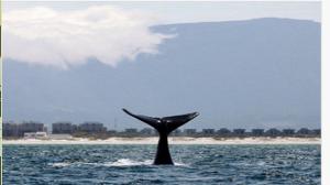 Whalesキャプチャ