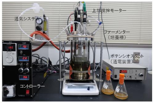 通電型培養装置(エチレン製造装置)