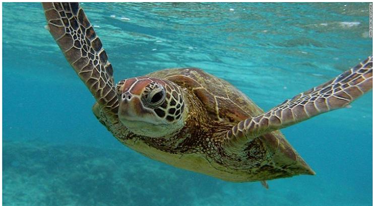 turtle4キャプチャ