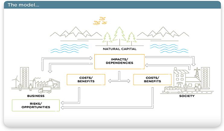Natural Capitalキャプチャ