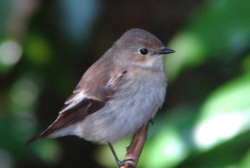 地球温暖化で鳥類「血の抗争」が始まった。渡り鳥と留鳥が鉢合わせで ...