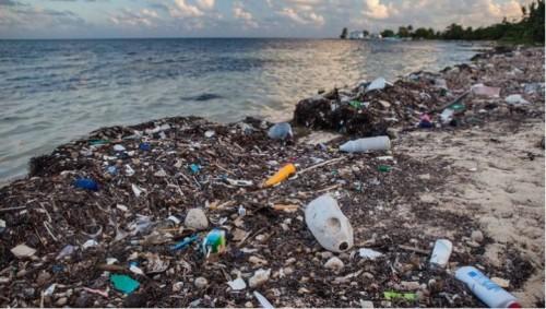 プラスチック廃棄物が無数に捨てられている海岸