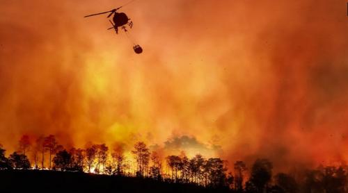 欧米で頻発する森林火災
