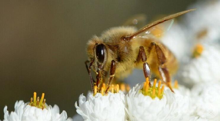 Bee1キャプチャ
