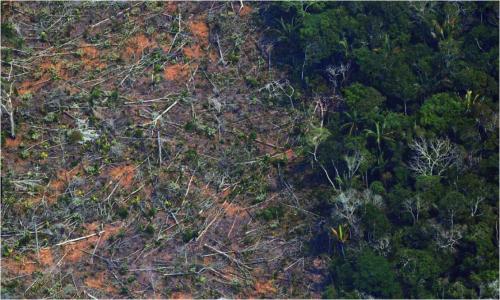 荒廃する熱帯雨林