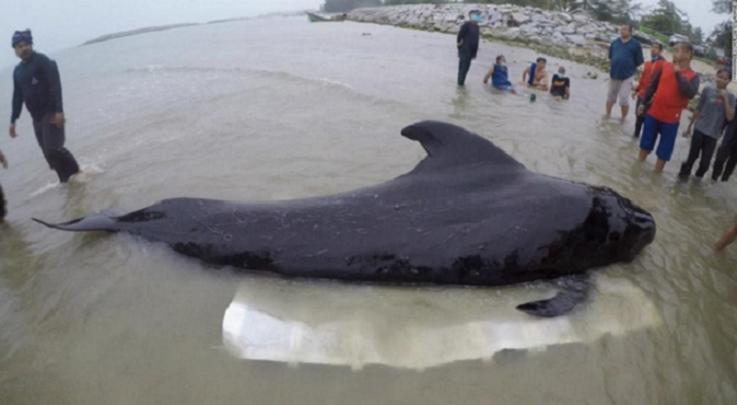 whales1キャプチャ