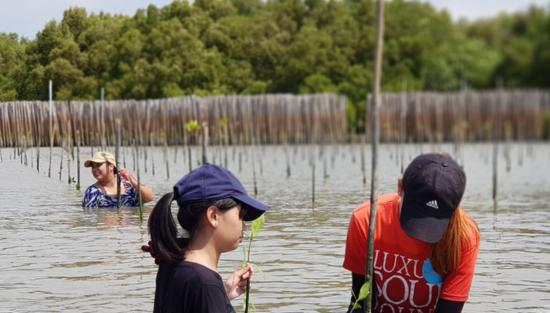 ボランティアがマングローブの植林作業を続ける