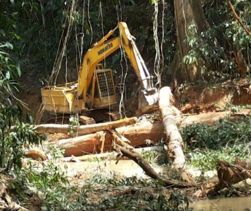 森を丸ごと破壊するサラワクでの伐採の模様