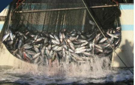 遠洋漁業での操業風景
