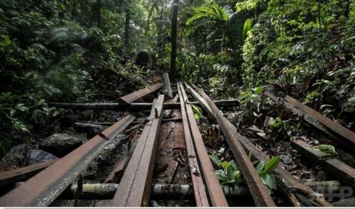 フィリピンのパラワン島の環境保護団体パラワンNGOネットワーク・インコーポレーテッド(PNNI)が同島の観光地エルニドに近い森林の違法伐採現場で発見した材木