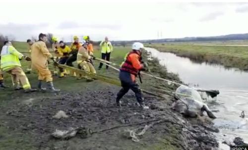 湖に打ち捨てられた馬を救助する作業