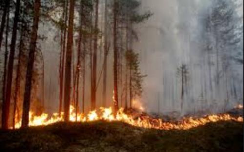 針葉樹林帯の消失量は過去1万年で最も多い