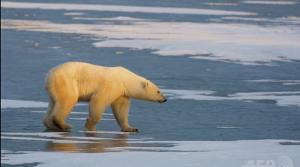 polarbearキャプチャ