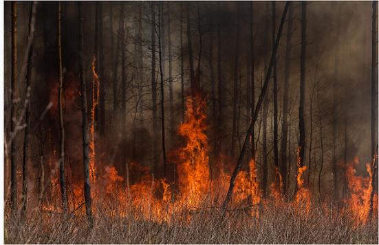 森林火災は、違法伐採者による放火とみられ、一人が逮捕されている