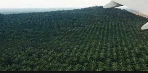 Sime Darbyがマレーシアで開発したパーム椰子植林地帯