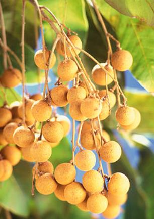 ロンガンの果実