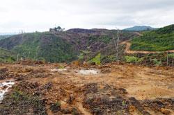 スマトラ島中部、リアウ州での森林破壊(2012年4月