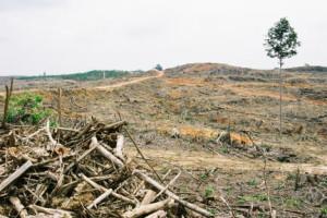 熱帯林の伐採が進むインドネシア。森林破壊で気候変動加速、コミュニティ崩壊も