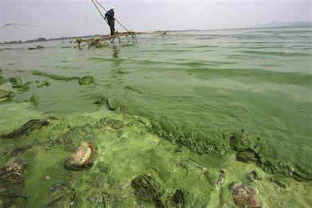 2月21日、中国では水質汚染も深刻さを増しており、政府は向こう10年間で8500億ドル(約80兆円)を投じて水質改善に取り組む姿勢を示しているが、その巨額投資も効果は薄いとみられている。写真は藻が大量発生した雲南省の湖。2009年5月撮影(2013年 ロイター)