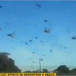 アルゼンチンに飛来したバッタの群れ