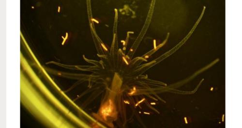 anemone1キャプチャ