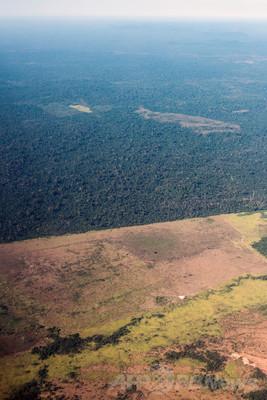 ブラジル・パラ州で進む森林開発(2013年8月9日)
