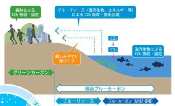 横浜市の「ブルーカーボン・オフセット制度」、2018年度のクレジット ...