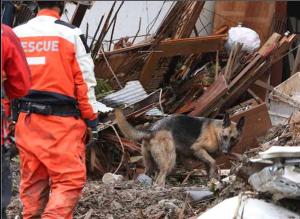 集中豪雨の土砂崩れで家ごとつぶされた広島市内の家