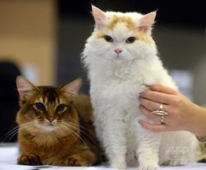 """ロシアの猫たち。金利の代わりに、""""癒し""""を提供?"""