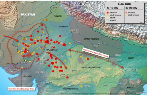 パキスタンからインドへと展開するバッタの群れ
