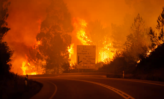6月にポルトガルで発生した広範囲な森林火災。森も、街も、家も、道路も火に包まれた。