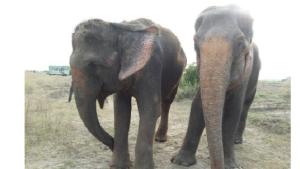 elephant2キャプチャ