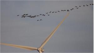 birdstrike2キャプチャ