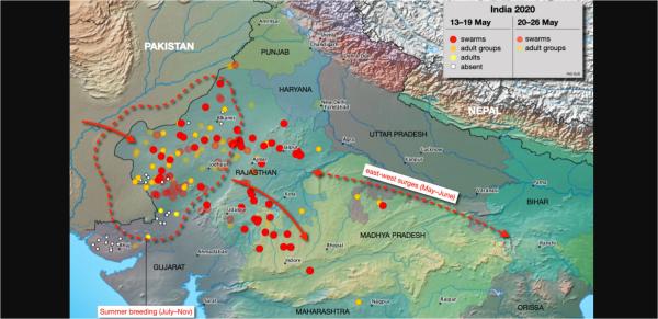インド西部から徐々に東に点在する群れの動き