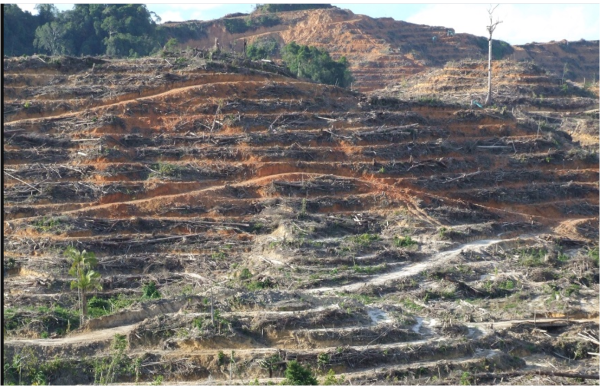 パーム油プランテーションのために皆伐された熱帯林(ボルネオ・サラワクで)