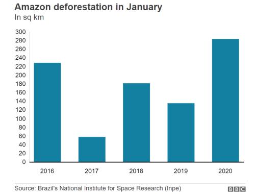 2015年以降の1月の森林破壊の推移