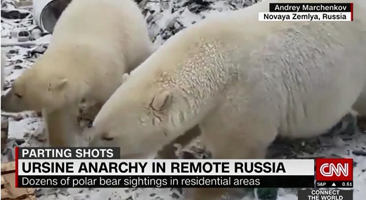 polarbear1キャプチャ