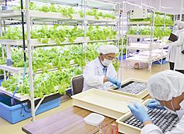 ひまわり信用金庫が空き店舗を活用し開園した「ひまわり ふれあい農園」。見学者を受け付け、新しい農業経営を提案する