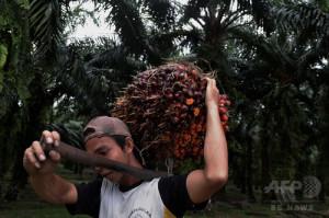インドネシア・スマトラ島でのパームヤシのプランテーション