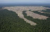 伐採で地肌がむき出しになったインドネシアの森林(2010年8月5日、インドネシア・スマトラ島)