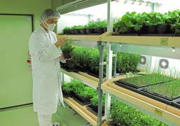 静岡県の掛川工場「実験棟」内に設けられた「植物栽培実験施設」