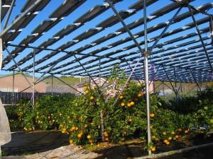 太陽光パネルの下で果樹を栽培することも可能