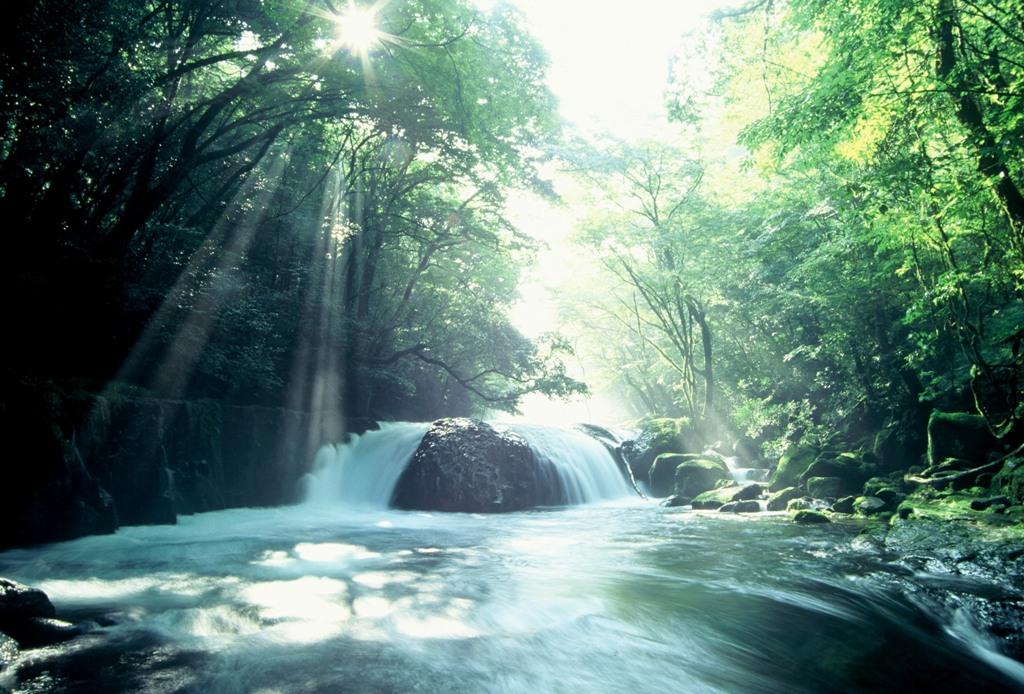 日本の豊かな水は何物にも代え難い